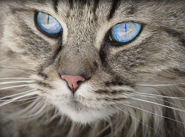 שירותים אוטומטיים לחתולים